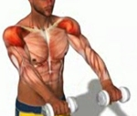 dumbbell front raise 2